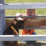 Sleepy Hollow Farm pumpkin patch petting zoo Campbellsville KY